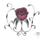 rosa abrindo vermelho escuro