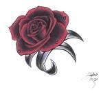 rosa vermelha escura com gotas e folhas pretas